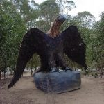 Eagle at Currawong 1